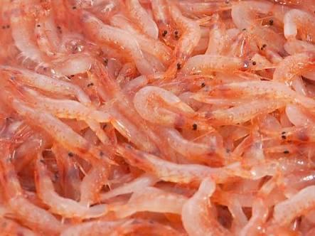 アスタキサンチンの含有量が多い食材は?鮭よりも多い食材