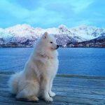 【夢占い】白い犬の夢と大雪は大吉の夢