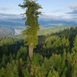 【巨大】世界一大きい樹その名は【ハイペリオン】